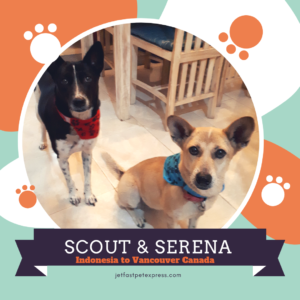 Scout & Serena